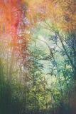 Künstlerischer, natürlicher Hintergrund mit Anlagen Lizenzfreie Stockbilder