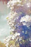 Künstlerischer, natürlicher Hintergrund mit Anlagen Lizenzfreie Stockfotos