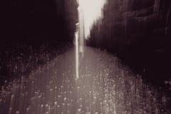 Künstlerischer Wald Stockfotografie