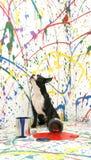 Künstlerischer Welpe Stockbilder