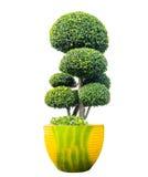 Künstlerischer Zwerg des grünen Baums und des Topfes stockbilder