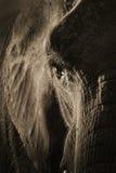 Künstlerisches symmetrisches Elefant-Porträt im Sepia Tone With Dramatic Backlighting stockbilder