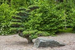 Künstlich geformter Baum Lizenzfreie Stockfotografie