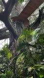 Künstliche Baumstruktur, hölzerner Gehweg Stockbilder