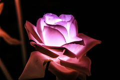 Künstliche Blumen des Nachtfarblichtes Lizenzfreies Stockbild