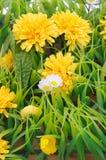 Künstliche Blumen und Grashintergrund stockbilder