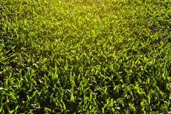 Künstliche Grasbeschaffenheit für Hintergrund Stockfotos