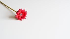 Künstliche rote Blume auf neutralem Hintergrund Stockfotografie