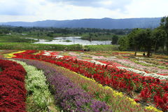 Künstlicher Garten bei Wangnamkeow Stockbilder