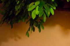 Künstlicher grüner Baum auf braunem Hintergrund Stockfotos