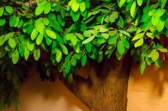 Künstlicher grüner Baum auf braunem Hintergrund Stockbild