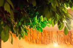 Künstlicher grüner Baum auf braunem Hintergrund Lizenzfreie Stockfotografie
