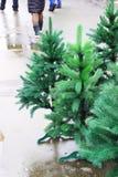 Künstlicher grüner Weihnachtsbaum auf dem nassen Asphalt Stockbilder