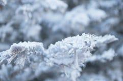 Künstlicher Schnee auf einem Weihnachtsbaum Stockfotos