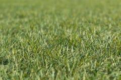 Künstliches geschossenes Tief des grünen Grases unten und nah oben mit kleiner Schärfentiefe Lizenzfreie Stockfotos