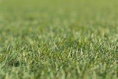 Künstliches geschossenes Tief des grünen Grases unten und nah oben mit kleiner Schärfentiefe Stockbild