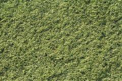 Künstliches grünes Gras schoss von oben, top-down Stockbilder