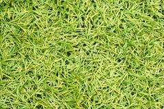 Künstliches grünes Plastikgras Lizenzfreies Stockfoto