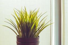 Künstliches Gras im schwarzen Topf am Balkon Stockbild