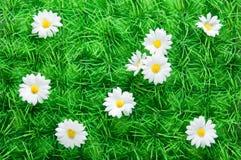 Künstliches Gras mit Gänseblümchen Stockbild