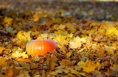 Kürbis auf gelbem Herbstlaub lizenzfreie stockfotografie