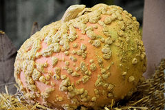 Kürbis auf Heu/Stroh mit einem Pilz Lizenzfreies Stockbild