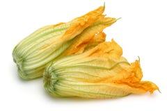 Kürbis-Blüten auf weißem Hintergrund lizenzfreies stockfoto