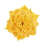 Kürbis, der Blume auf weißem Hintergrund schnitzt Stockfotos