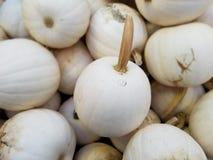 Kürbis-Flecken, Landwirt-Markt, Oktober, Fall stockfoto