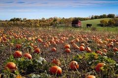 Kürbis-Flecken und Herbstlaub Lizenzfreie Stockfotos