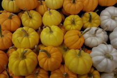 Kürbis-Gemüsehintergründe lizenzfreie stockfotos