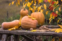 Kürbis, Kürbis Glücklicher Danksagungstageshintergrund Autumn Thanksgiving Pumpkins über hölzernem Hintergrund, Stillleben Schöne Stockfotos