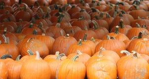 Kürbis-Halloween-Danksagung Stockbilder