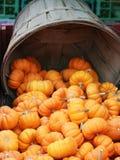 Kürbis-Halloween-Danksagung Stockfotos