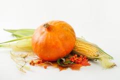 Kürbis, Mais, Beeren der Eberesche und Herbstlaub auf Weiß Lizenzfreie Stockfotos