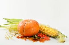 Kürbis, Mais, Beeren der Eberesche und Herbstlaub auf Weiß Lizenzfreie Stockfotografie