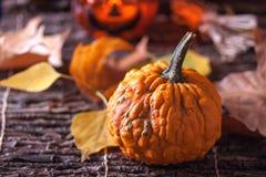 Kürbis mit Herbstblättern Stockfotografie