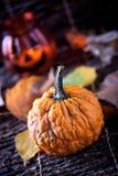 Kürbis mit Herbstblättern Stockbilder
