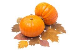 Kürbis mit zwei Orangen auf dem Herbstlaub lokalisiert Stockfoto