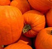 KÜRBIS, Orange, Fall-Ernte, Danksagung, mittlere Größe stockbild