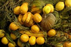Kürbis-u. Frucht-Schüssel Stockbilder