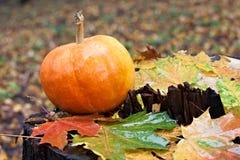 Kürbis und Ahornblätter im Herbstwald auf Stumpf Lizenzfreie Stockbilder