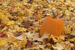 Kürbis und Blätter Stockbild