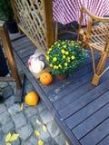 Kürbis und gelbe Blumen auf der Türstufe ein offenes Café Lizenzfreie Stockbilder