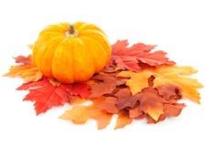 Kürbis und Herbstblätter Stockfotografie