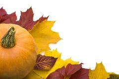 Kürbis- und Herbstblätter Stockfotografie