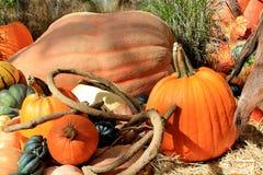 Kürbis- und Herbstgemüse Lizenzfreie Stockfotos