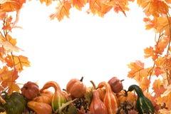 Kürbis und Kürbisse mit Blättern Lizenzfreies Stockbild