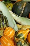 Kürbis und Mais Lizenzfreies Stockbild