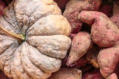 Kürbis und Süßkartoffel Stockbilder